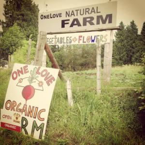 One Love Farm Stand
