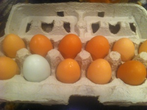 Pullet Eggs and an Egg Conversion Chart