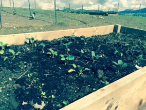 Asparagus, Potatoes, Rhubarb and More - 1
